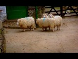Эдвардианская ферма 5